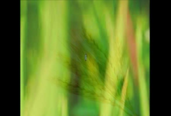 93353 การจัดการผลผลิตพืช ครั้งที่ 4 เรื่อง แนวคิดเกี่ยวกับการแปรรูปผลผลิตพืช ตอนที่ 1