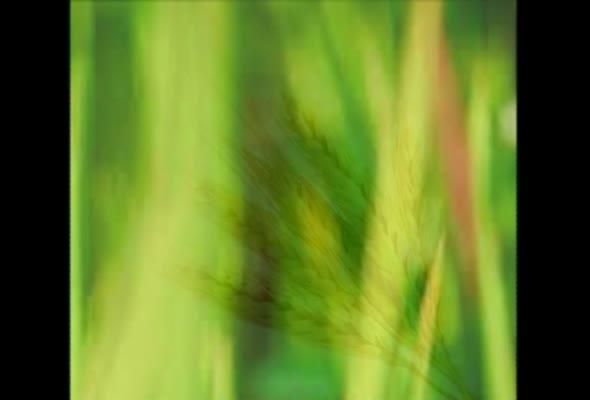 93353 การจัดการผลผลิตพืช ครั้งที่ 4 เรื่อง แนวคิดเกี่ยวกับการแปรรูปผลผลิตพืช ตอนที่ 2